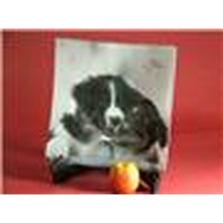 Glasschale Border Collies