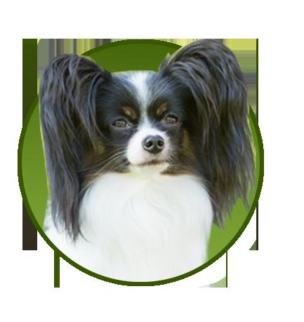 Für kleine Hunde