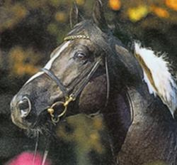 Für Eure Pferde