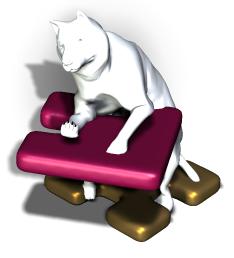 Gesundheit Hund