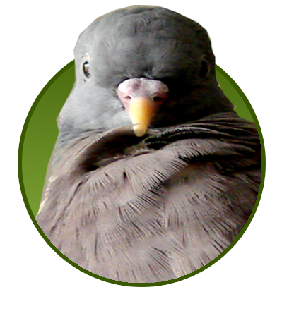 Für Vögel